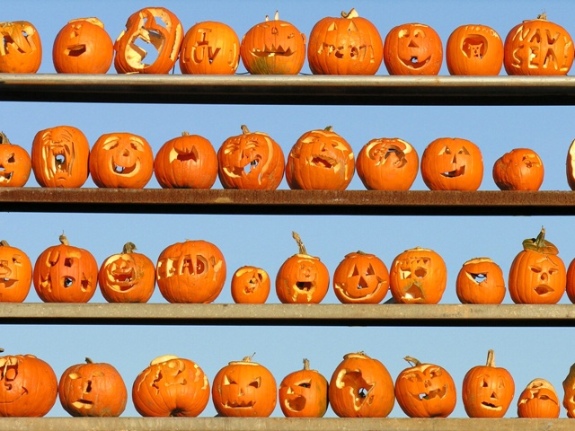 Keen Pumpkin contrast