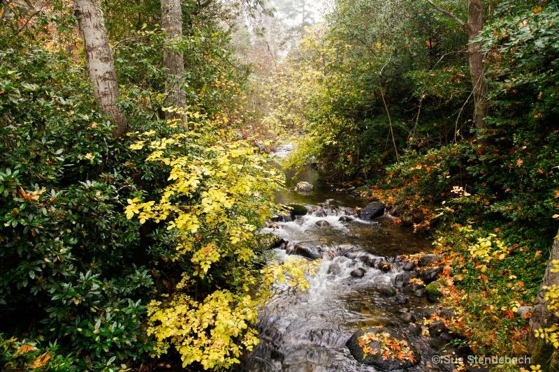 Fall on Ashland Creek, Ashland, Oregon