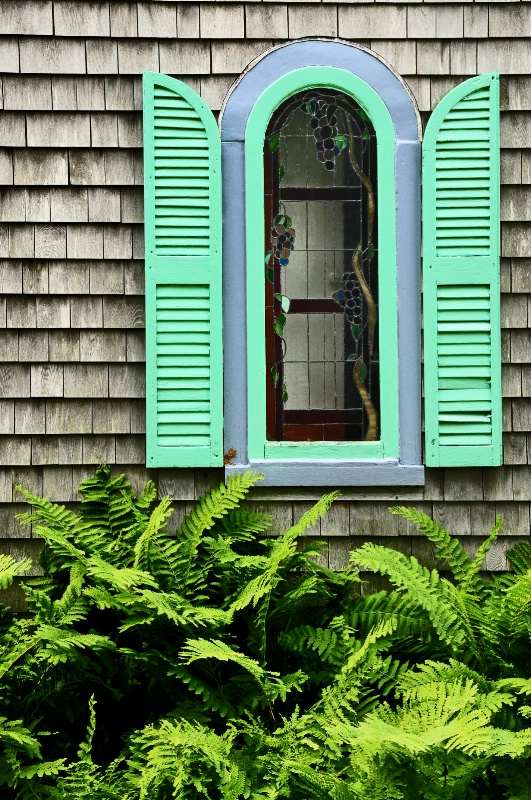 Fern Window