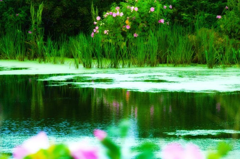Pond Peace