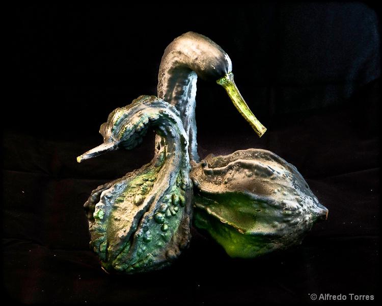 Ducks or Geese?