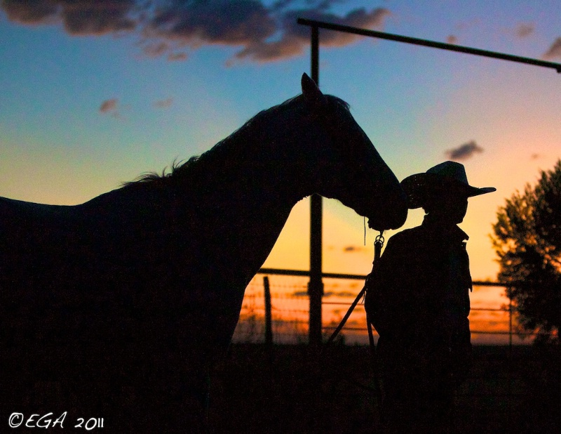 Silhouette cowboy and horse