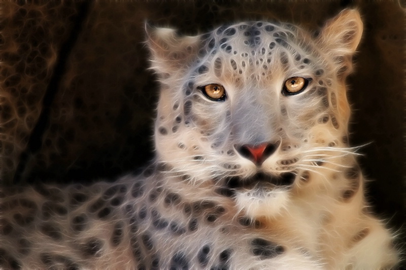 Memphis Snow Leopard Close-Up--Fractalius