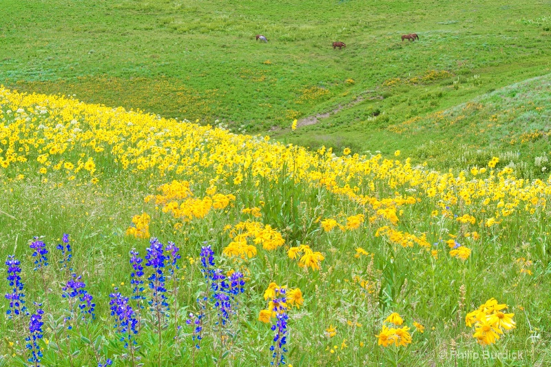 Serene  Meadow