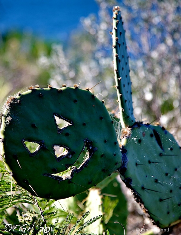 Prickly Pear Halloween