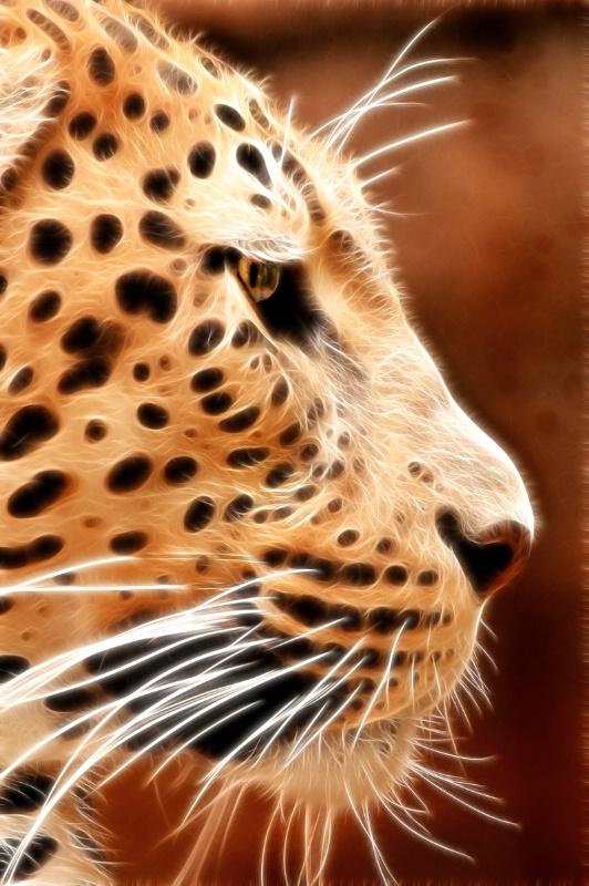 Memphis Leopard Profile--Fractalius