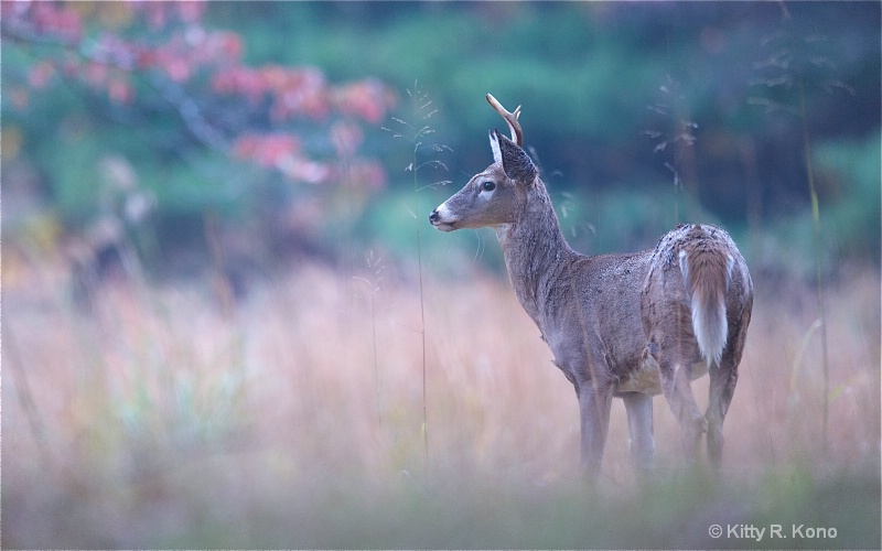 Deer in the Fall Grass