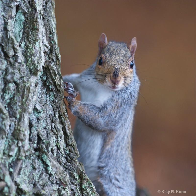Executive Squirrel Posing for Head Shot