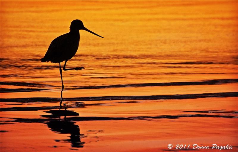 Seaside Yoga