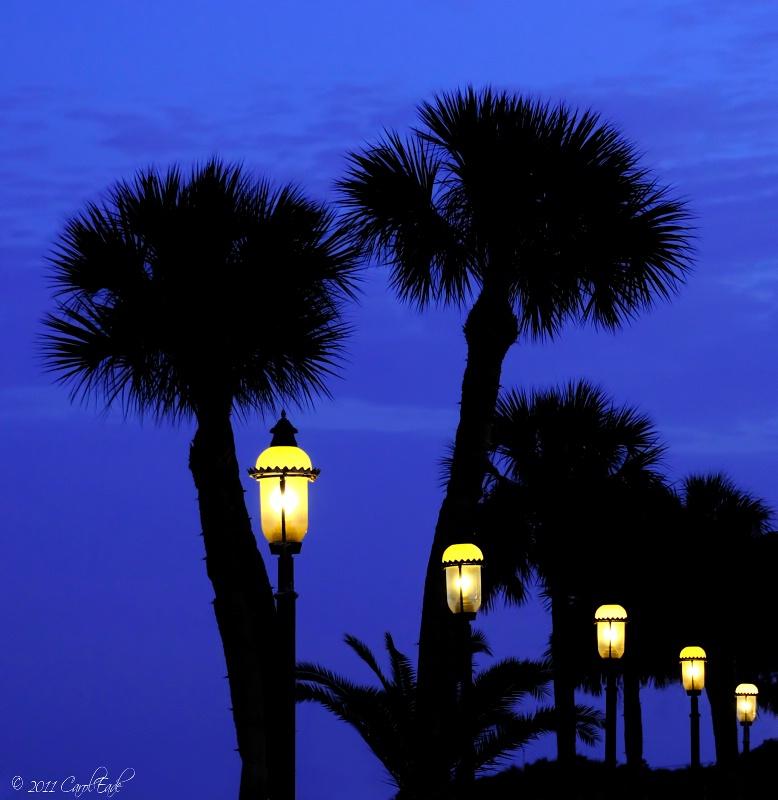 Palms in Twilight