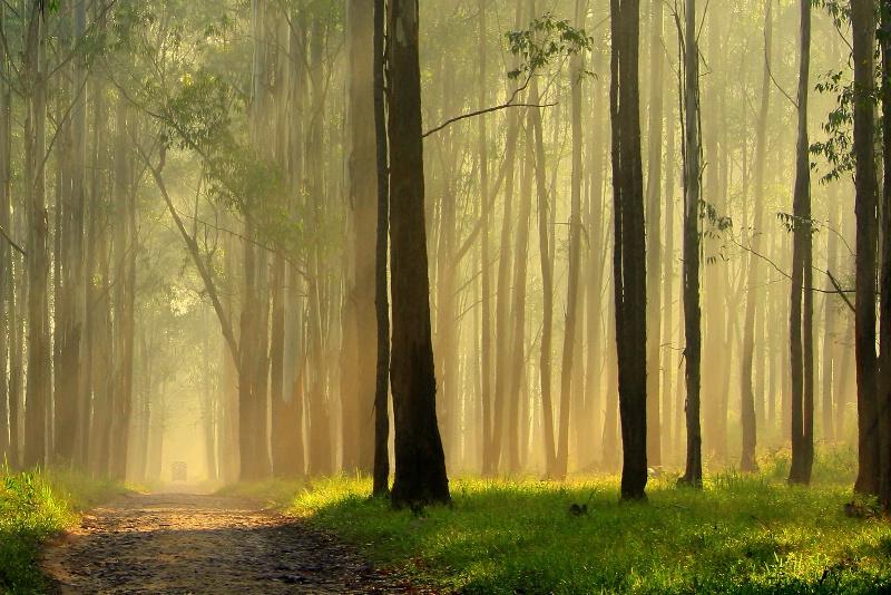 Magical Light in Jungle