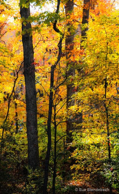 Fall Colors II - Arlington, VA