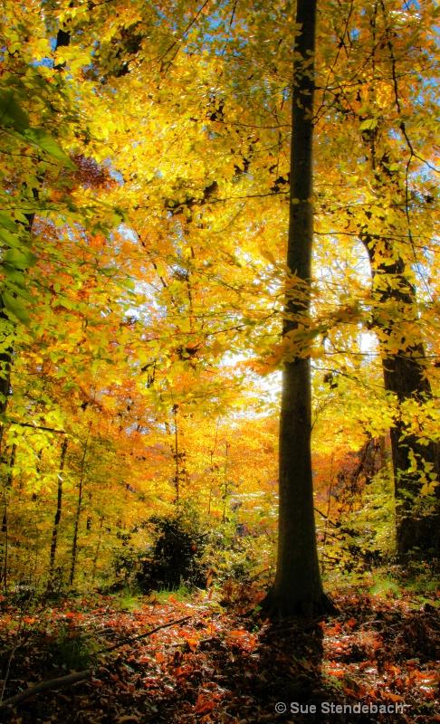 Fall Colors I - Arlington, VA