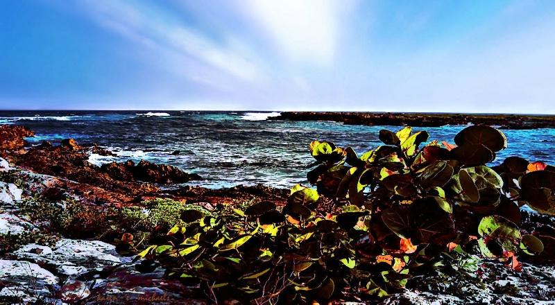 Sea grape on the Sea