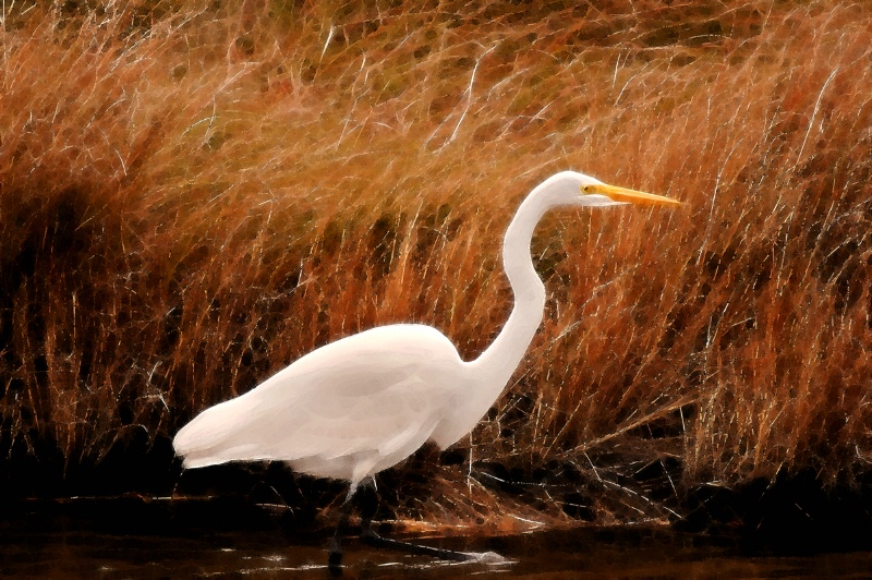 Chincoteague Egret Artwork