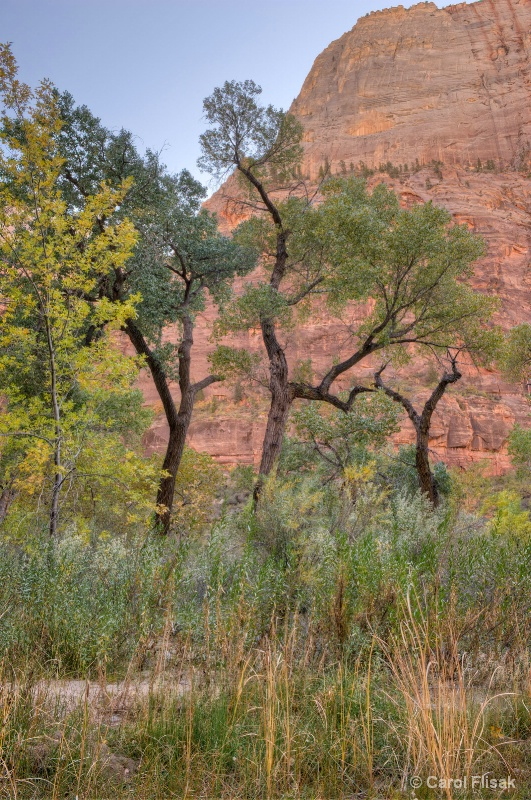 Dancing  Trees ~ Zion National Park