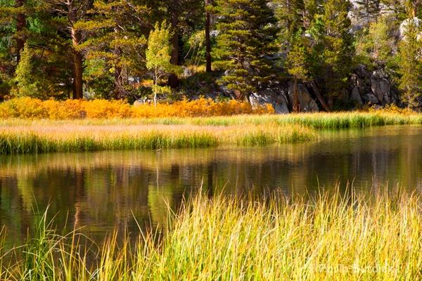 Sierra Reflections