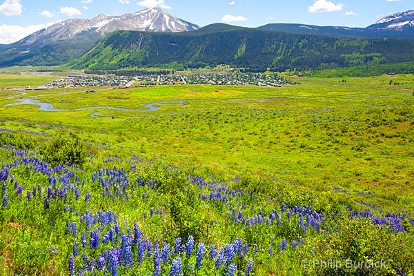 lupine trail vista