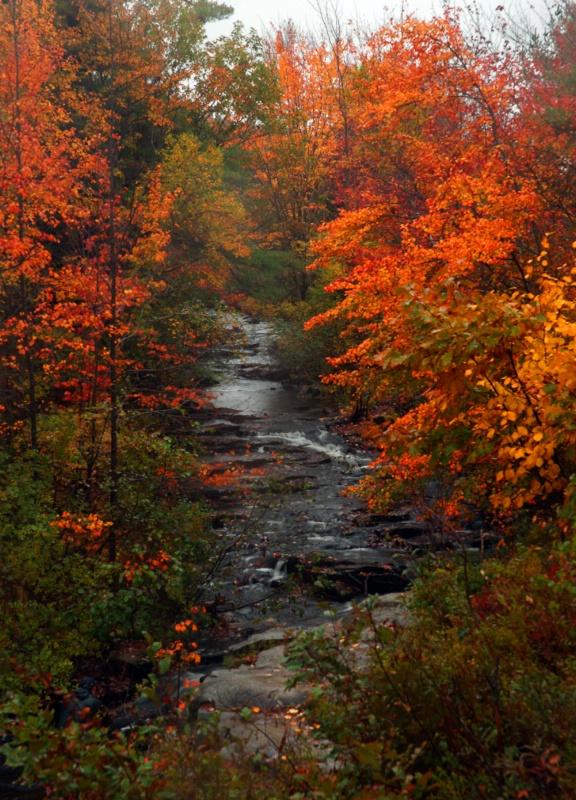 Autumn Rain and Color