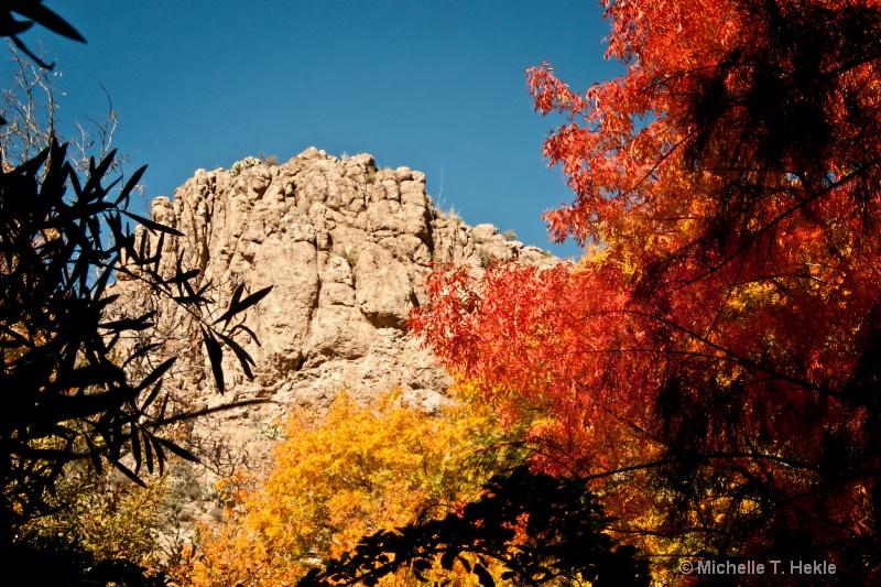 Arizona fall colors