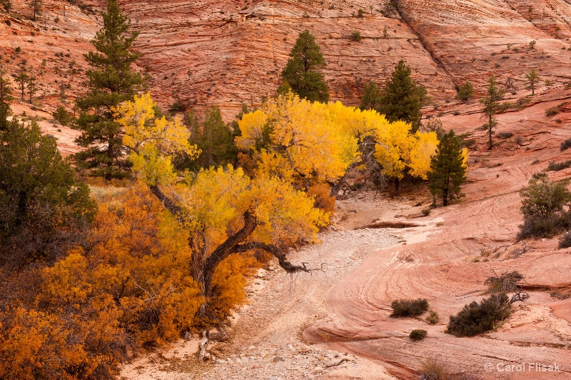 Fall Color in Zion ~ Zion National Park