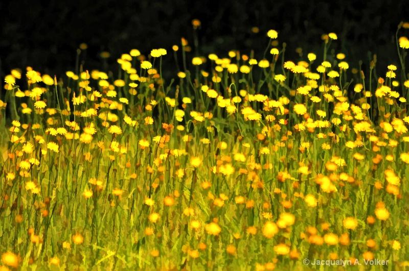 Wildly Yellow!