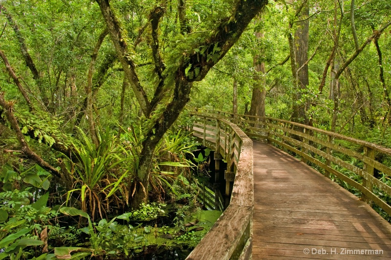 And the Boardwalk Curves a Corkscrew Swamp