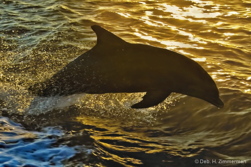 Dolphin at Sunset at 10000 Islands
