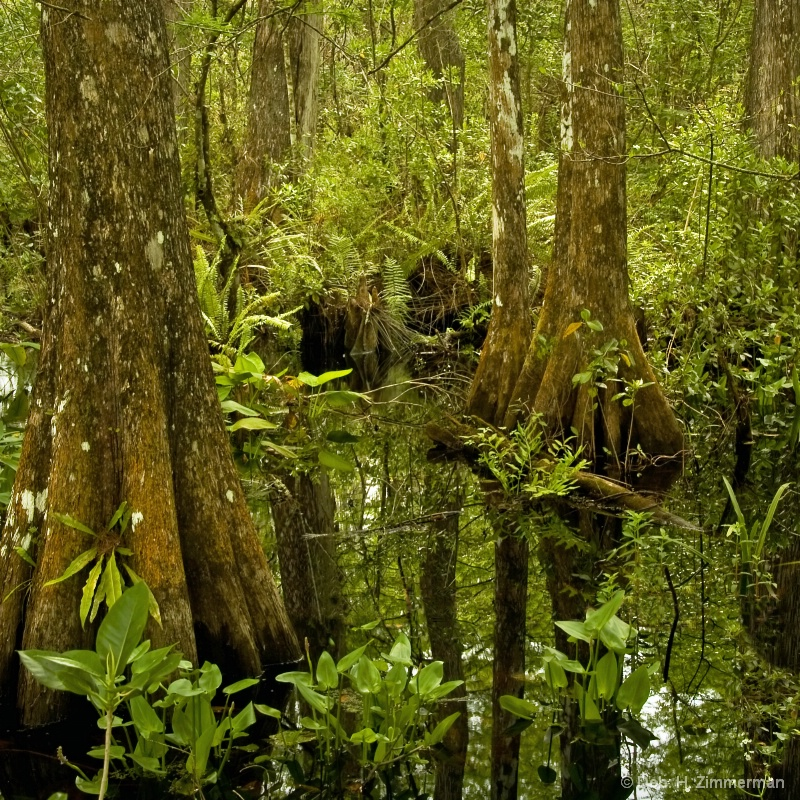 Verdant Corkscrew Swamp