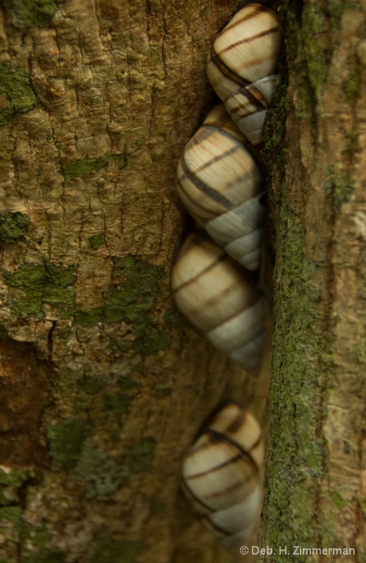 Tree Snails at Tree Snail Hammock