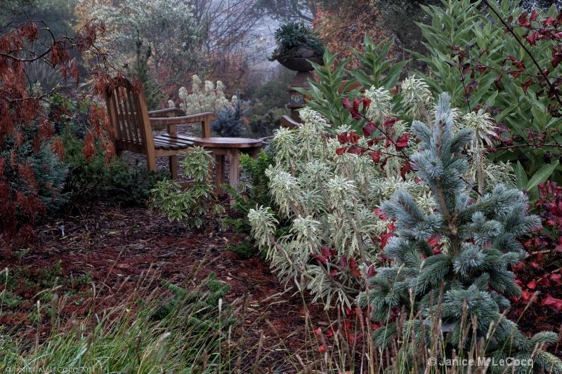 Sara's Garden#2