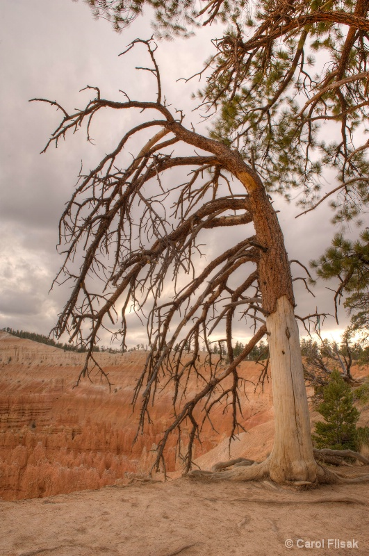 Bowing to Beauty ~ Bryce Canyon National Park