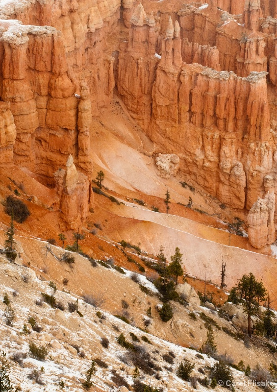 Nature's Gifts ~ Bryce Canyon National Park
