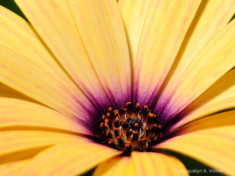 Inner Beauty of the Daisy!