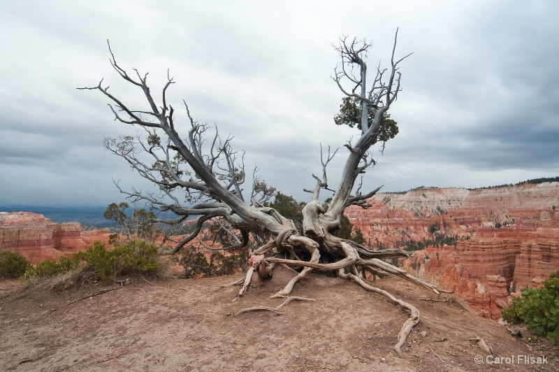 Weathered Sentinel ~ Bryce Canyon Nat'l Park