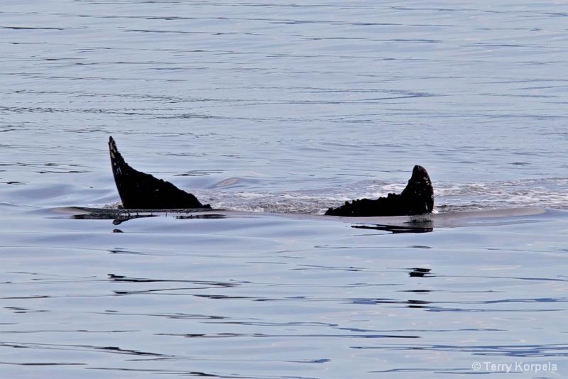 Whale Alaska