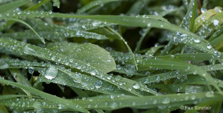 Frozen Rain 3