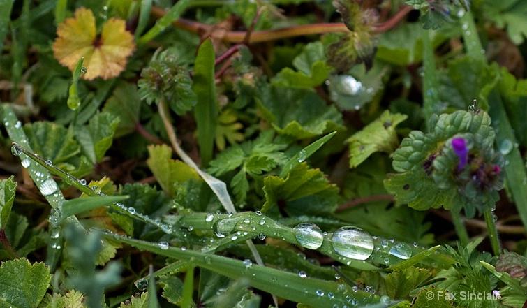 Frozen Rain 2