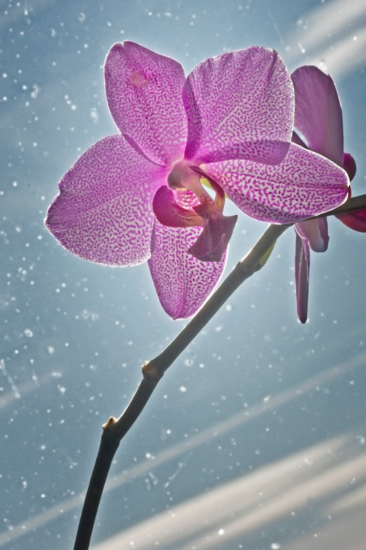 Orchid in a Winter Window