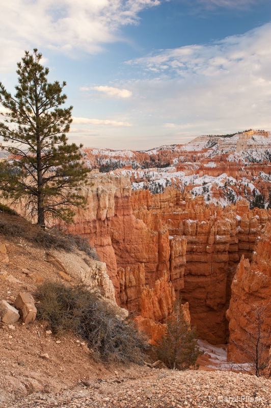 Solitude in Beauty ~ Bryce Canyon Nat'l Park