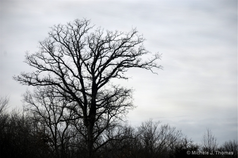 A Tree With Veins Fading into the sky !