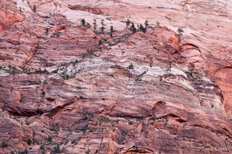 Red Rock Abstract ~ Zion National Park