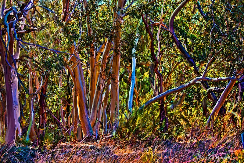 magic bushland 1- 1314 copy