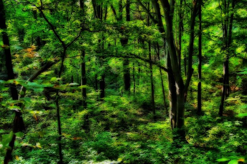Deep Forest Green!