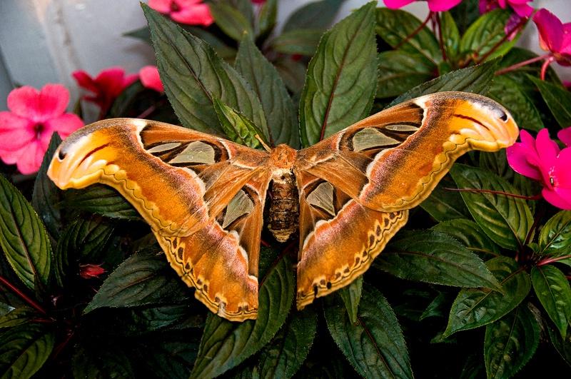 Not a Butterfly