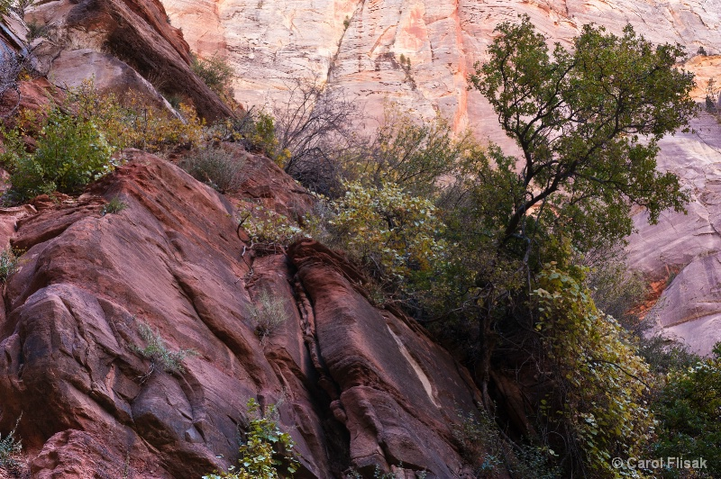 Strong Roots ~ Zion National Park