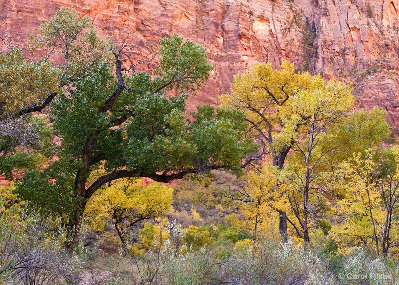 Changing Colors ~ Zion National Park
