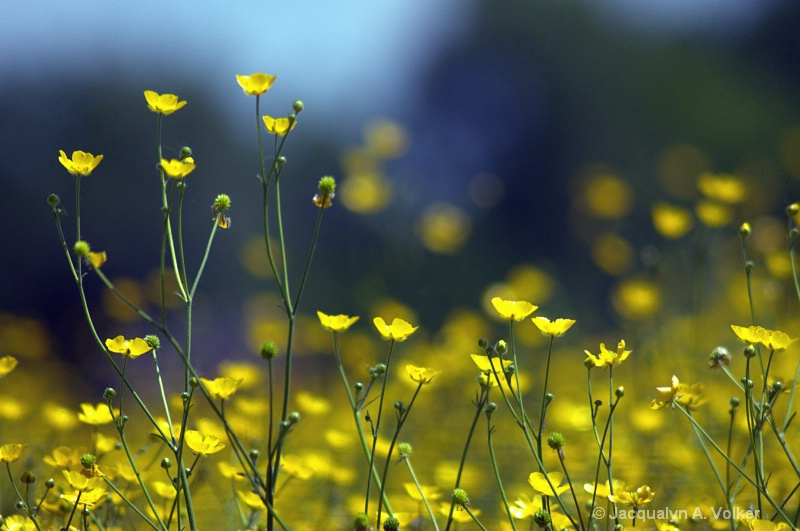 Free to be a Buttercup!