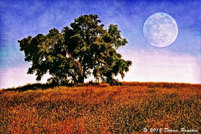Blue Moon Morning