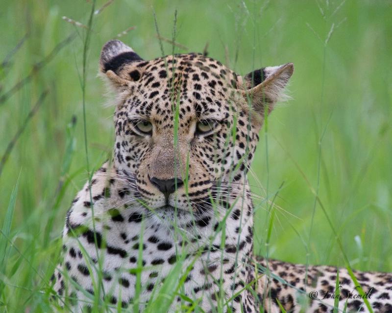 Leopard - Dec 31st, 2011